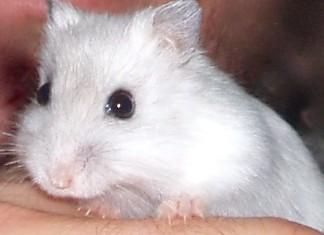 hamster paris