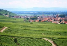 vineyards close to paris